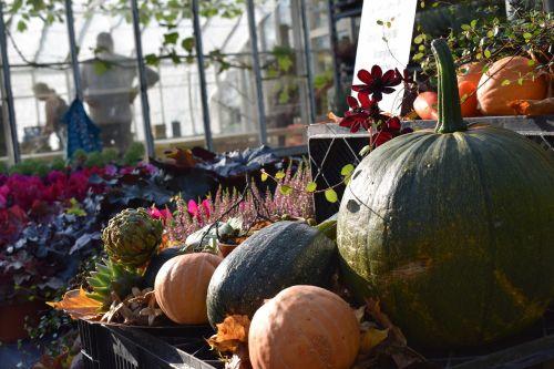 autumn market pumpkin