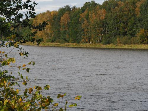autumn lake leaves