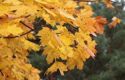 autumn seasons of the year autumn gold