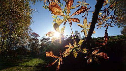 autumn autumn leaves sunshine