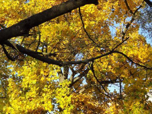 autumn nostalgia trees