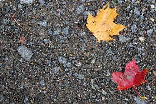 ruduo,lapai,lapai,kritimo lapija,fonas,akmenys,gamta,raudonas lapas,aukso lapai,raudoni lapai,kritimo spalva,rudens nuotaika