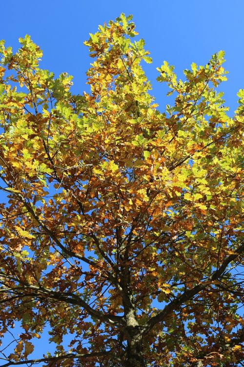 autumn tree golden autumn