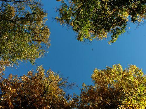 autumn autumn leaf leaf