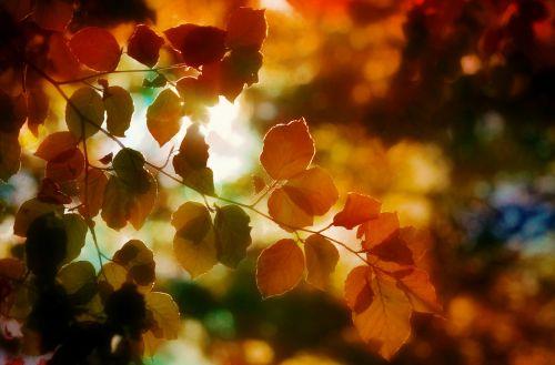 autumn foliage light