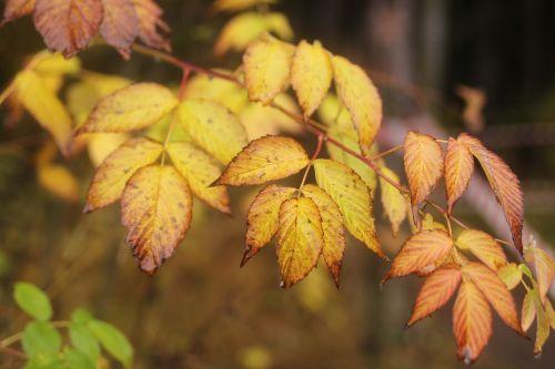 autumn sheet yellow leaves