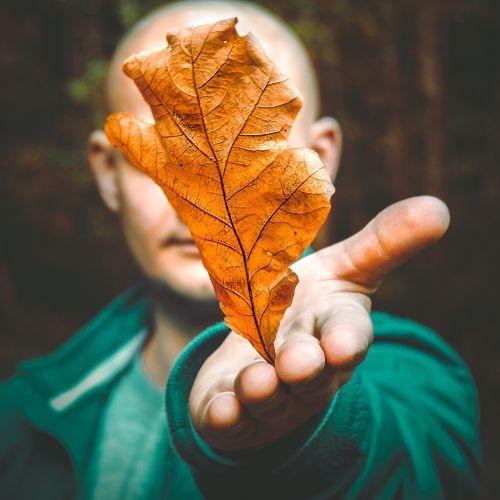 autumn leaf nature