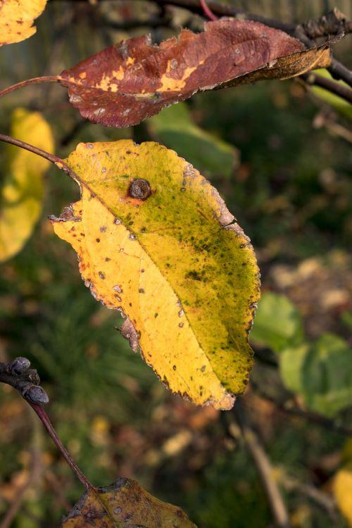 autumn foliage yellow leaves