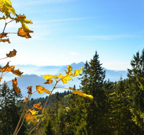 autumn leaves pilatus