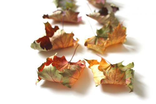 autumn fall foliage fall leaves