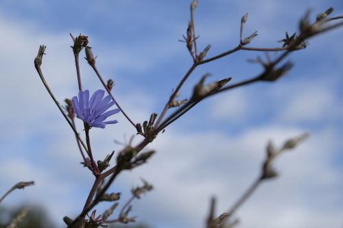 autumn flower blossom