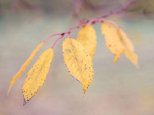 autumn leaves autumn mood