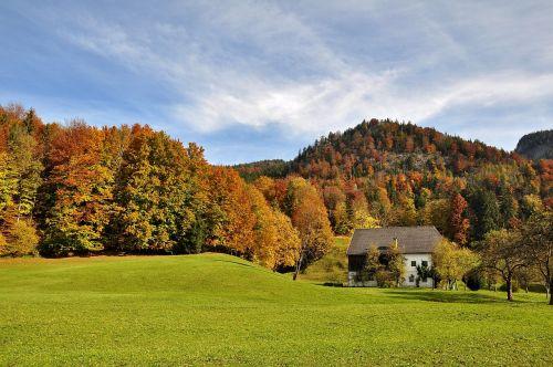 autumn golden autumn autumn forest