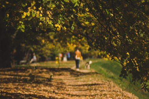 autumn walk path
