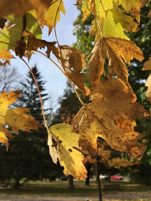 autumn leaves fall