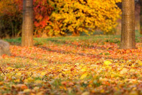 autumn leaves leaf