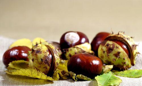 autumn chestnuts horse chestnut