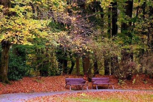 autumn bank benches