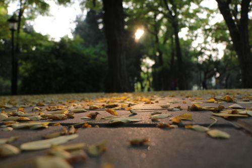 autumn defoliation afterglow