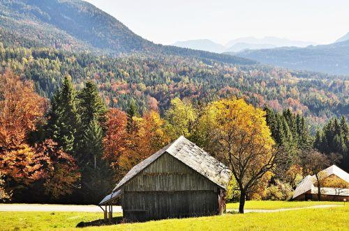 autumn autumn mood golden autumn