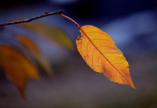 autumn fall foliage leaf