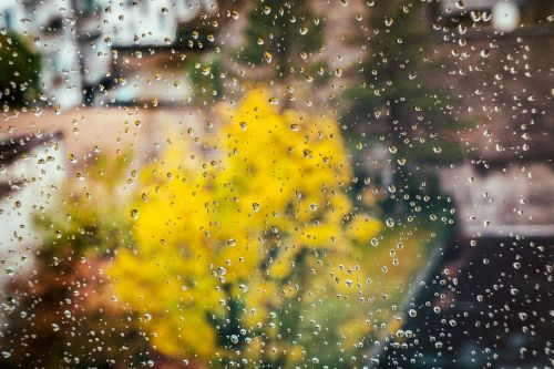autumn window raindrop