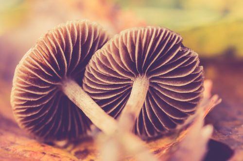autumn mushroom nature