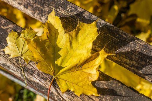 autumn holidays yellow