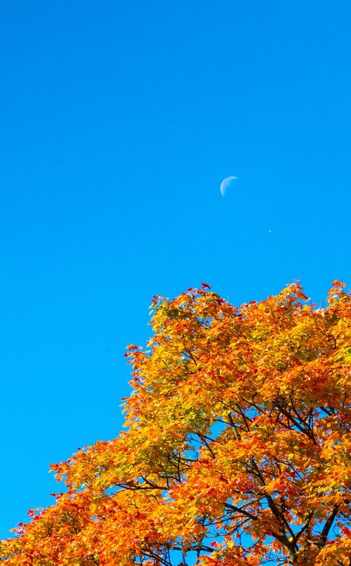 autumn crown color