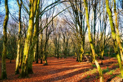 autumn leaves trees