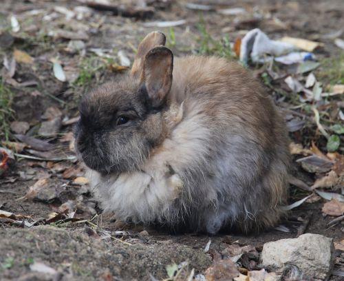 autumn rabbit animals