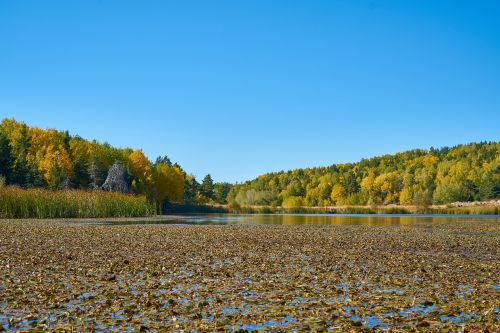 autumn,season,landscape,nature,beautiful,background,outdoor,withered leaves,the leaves are,winter season,plant,dry leaves,sky,forest,leaves,tree,peace,yellow,spring,reedy,water,lake,mountain
