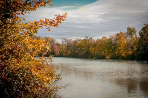 autumn tree lake
