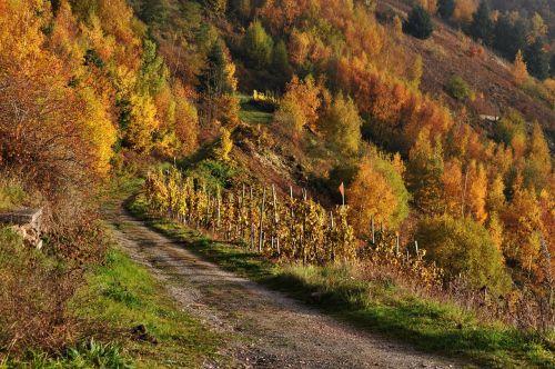autumn mosel vineyards