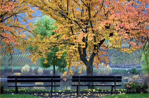 autumn mosel village