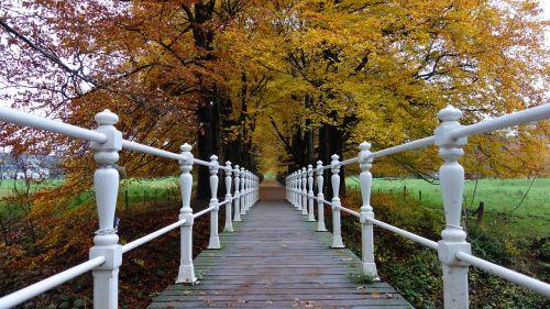 autumn autumn leaves seasons