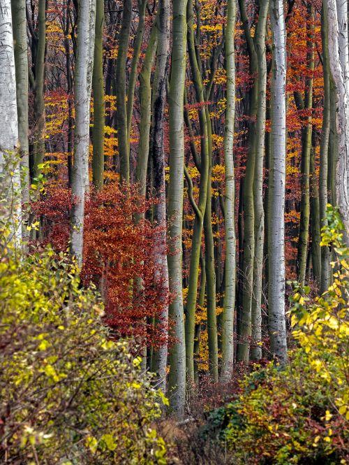 autumn autumn forest autumn mood