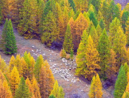 autumn argentera valley piemonte