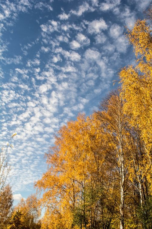 autumn nature autumn nature