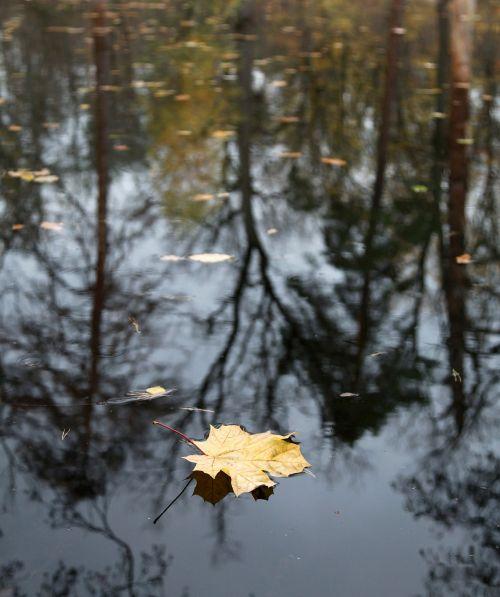 autumn late autumn fall colors