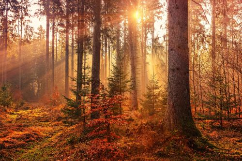 autumn forest light