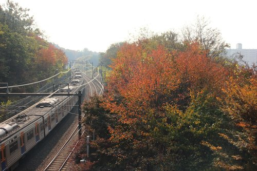 autumn  nature  wood