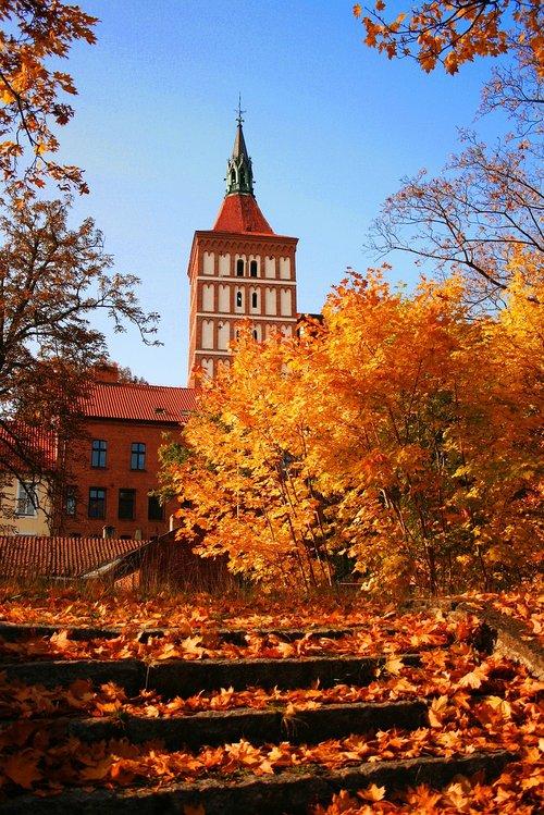 autumn  tree  gold