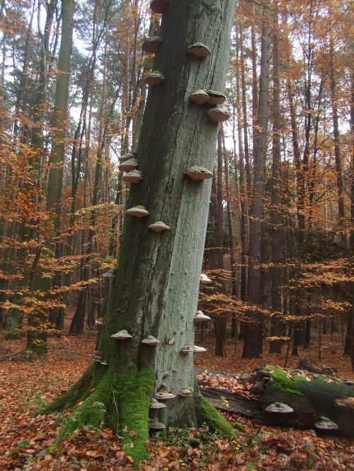autumn forest tree fungi