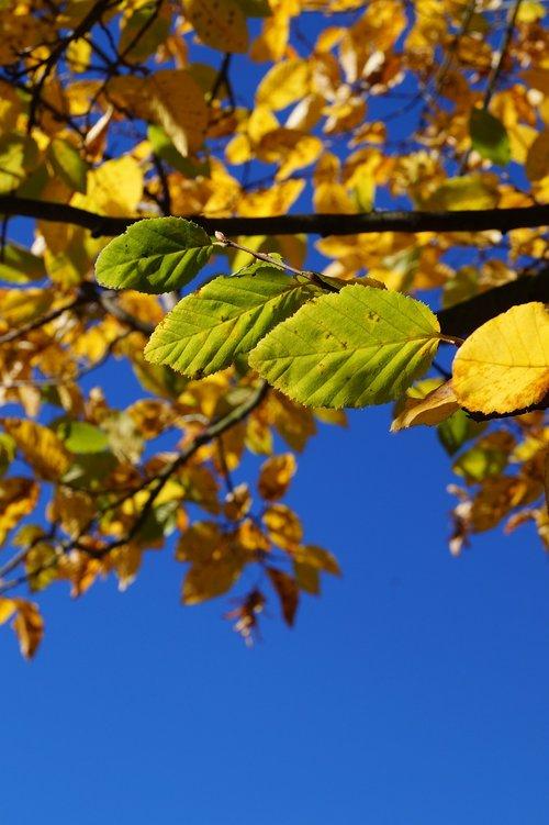 autumn  leaf  fall foliage