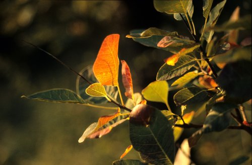 autumn  foliage  light