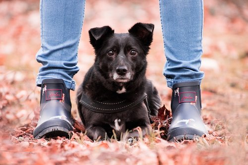 autumn  dog  animal