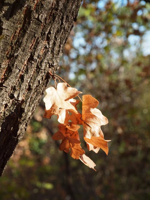 autumn  dry leaf  log