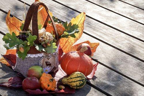 autumn  autumn decoration  thanksgiving