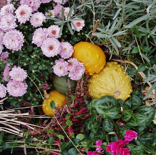 autumn  flowers  arrangement